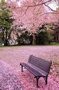 washington dc springtime